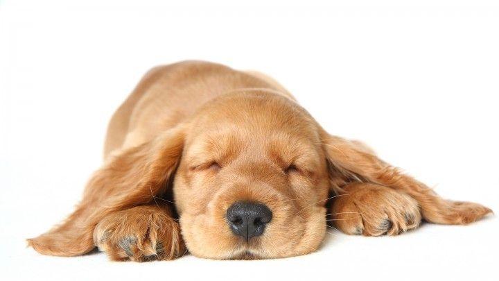Hoe slapen dieren?