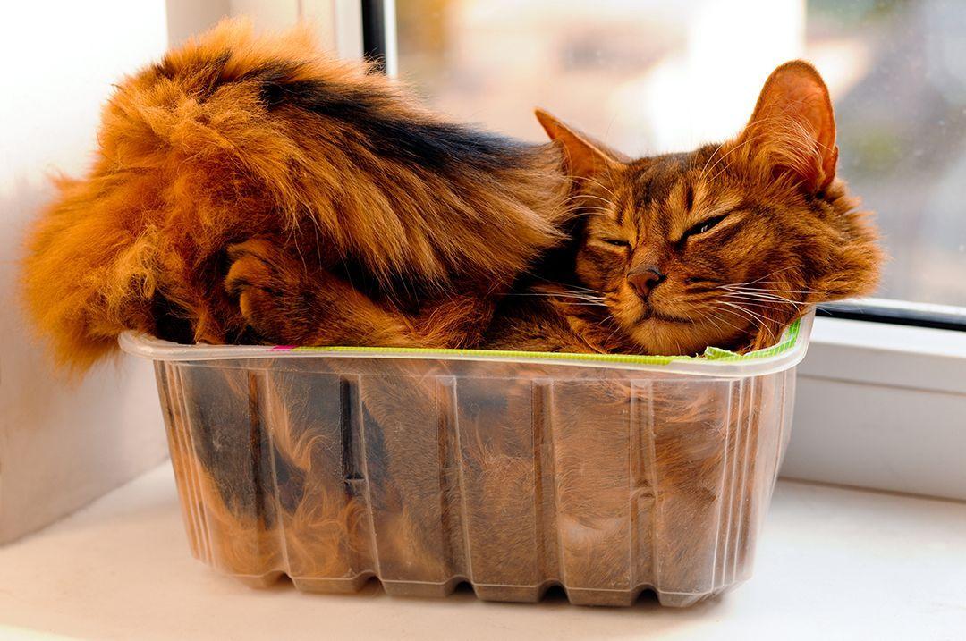 Kat in de Bak - Gekke plekken waar dieren slapen