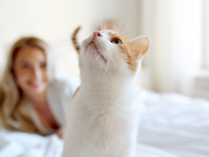 Kat in bed? Niet doen!