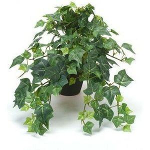 Engelse klimop plant slaapkamer