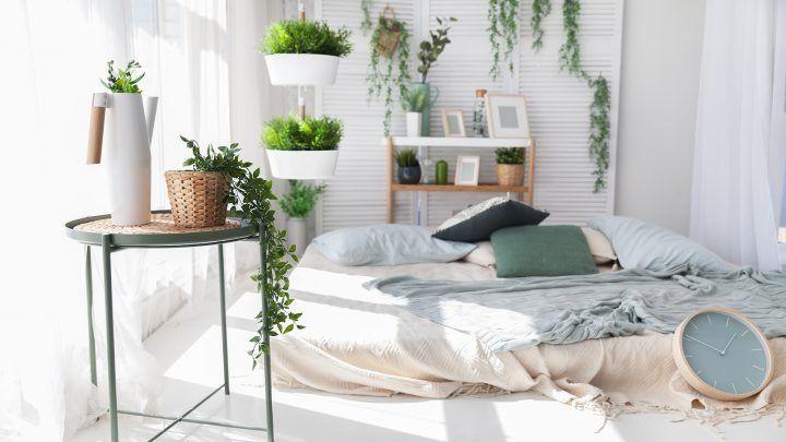Slaapkamerplanten die slaap bevorderen