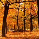 herfst-najaar-10 redenen waarom de herfst zo goed voor je is