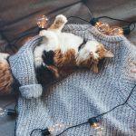 Warme truiendag: Dekbedovertrek met breipatroon
