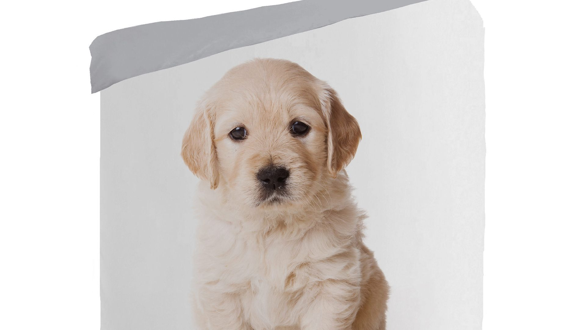 Puppy kinderdekbedovertrek