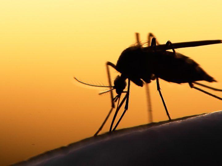 Deze dingen over muggen wist jij nog niet